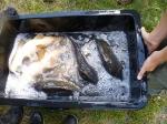 VHF Fischen 2012_12